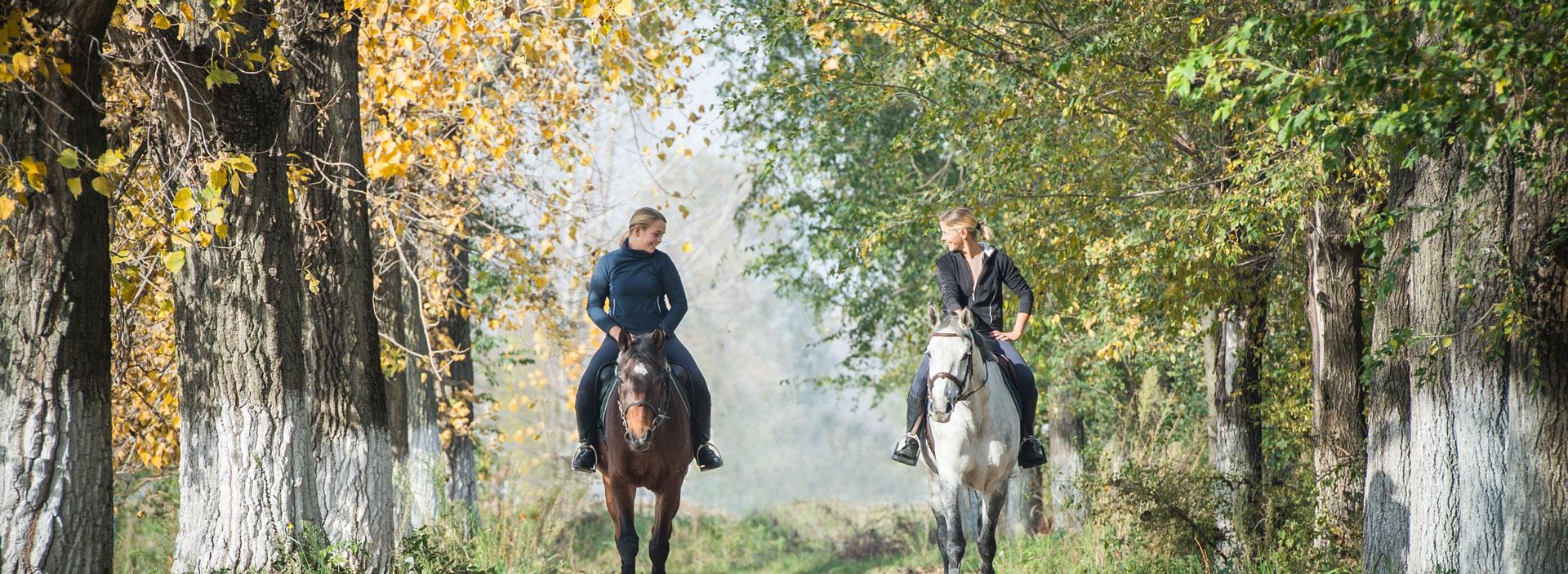 Zwei Reiter im Wald