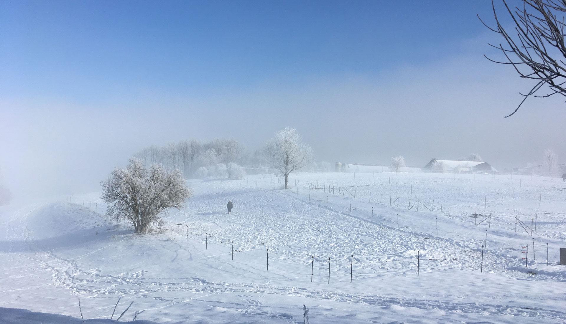 Winterkoppeln
